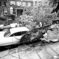 A tree that fell onto a car surrounded by onlookers